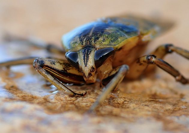insect-622415_640
